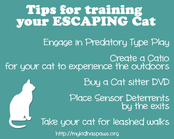 CatTraining