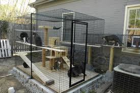 Photo courtesy of catbitats.com