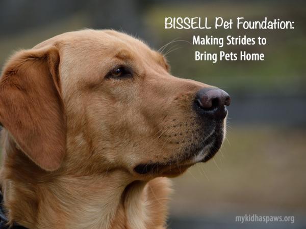 BISSEL-Pet-Foundation
