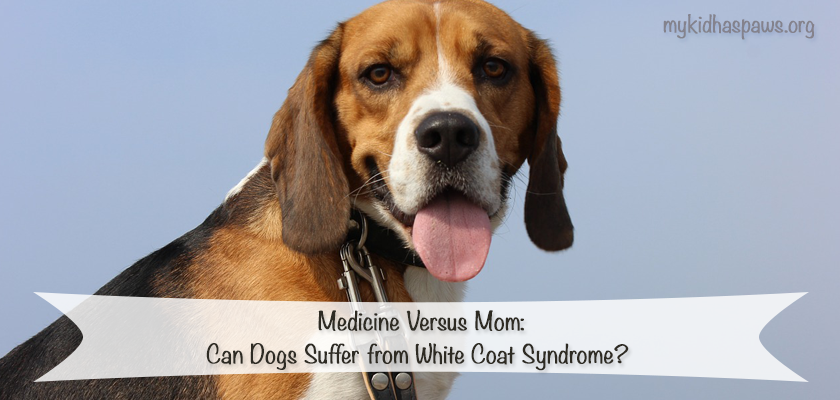 Can Dogs Suffer from White Coat Syndrome?
