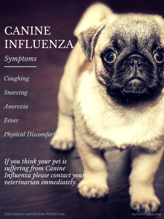 Canineinfluenza