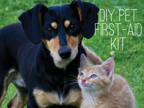 DIY-PET-FIRST-AID-AID-GRAPHIC-2