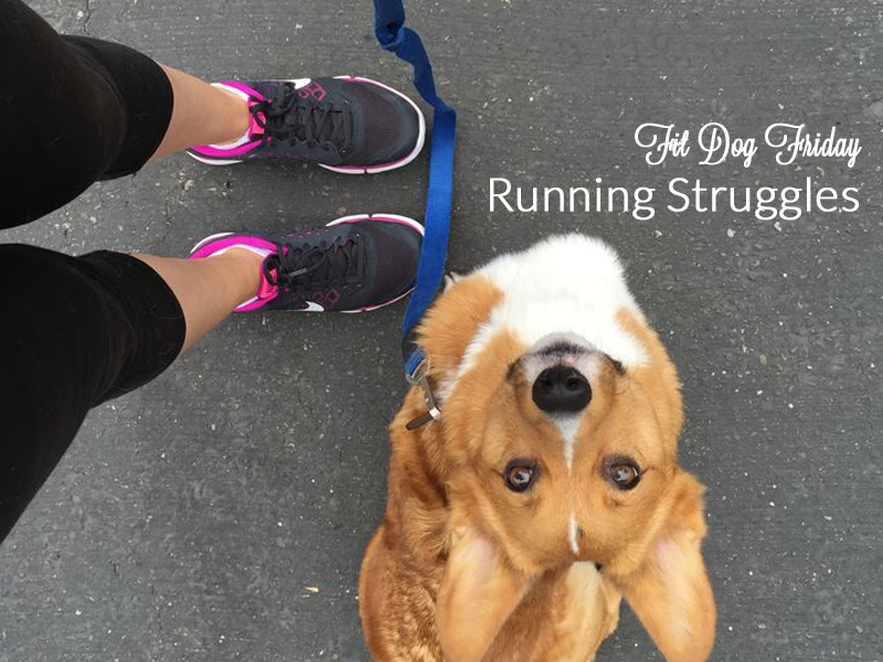 Running Struggles: Getting Fit With Your Dog