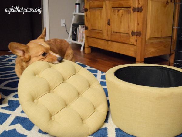 Organizing Your Dog's Toys