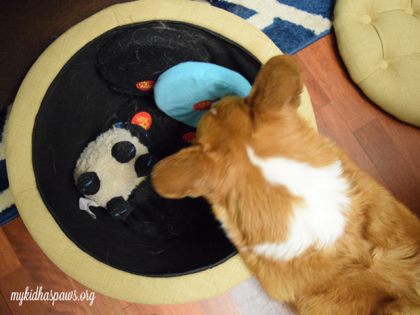 Organizing Your Dog's Toys