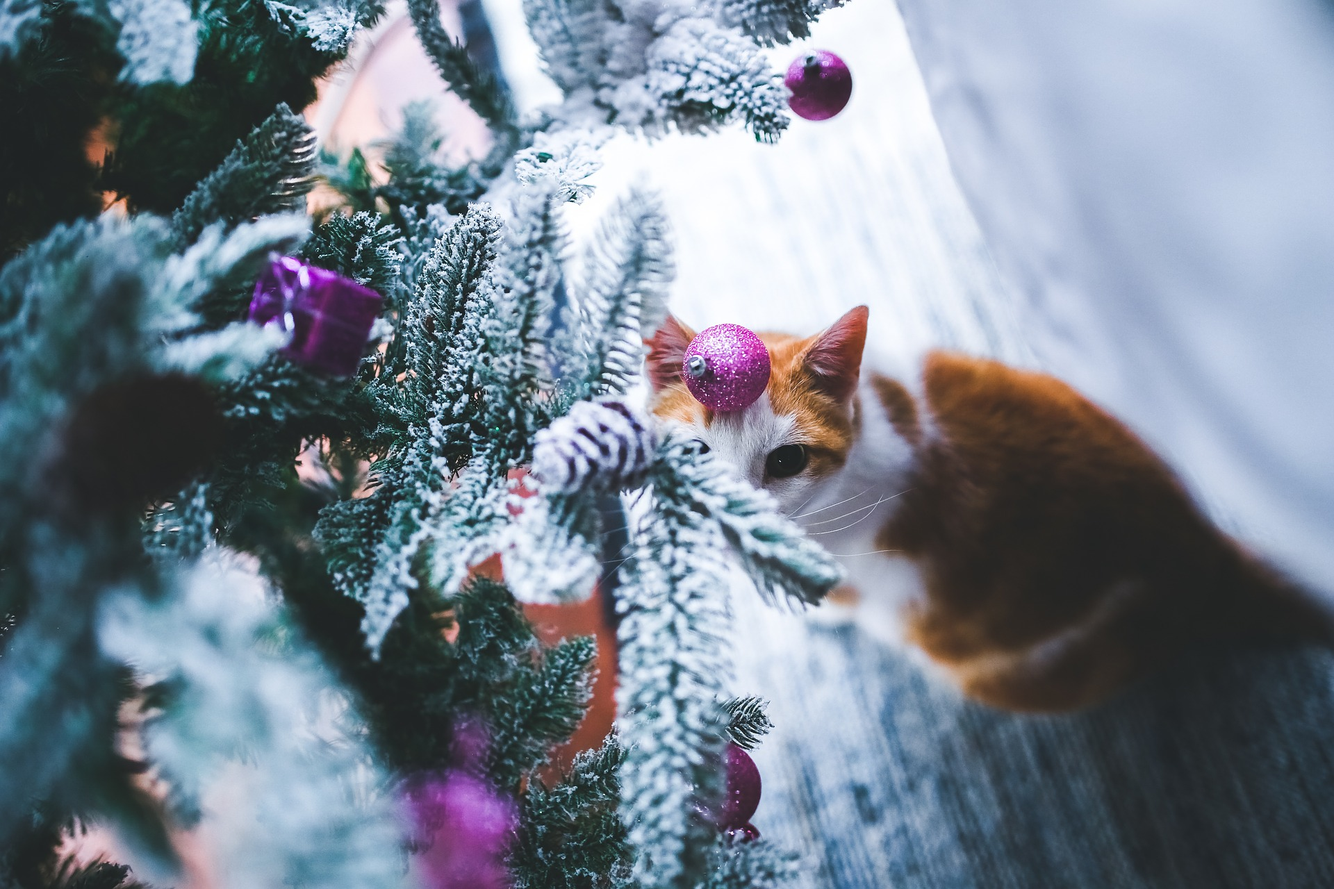 Furlocity May Be the Key to Your Holiday Travels!
