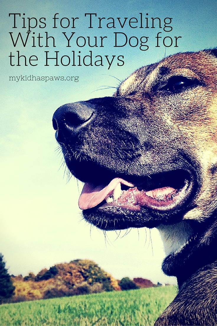 Tips for Traveling With Your Dog for the Holidays