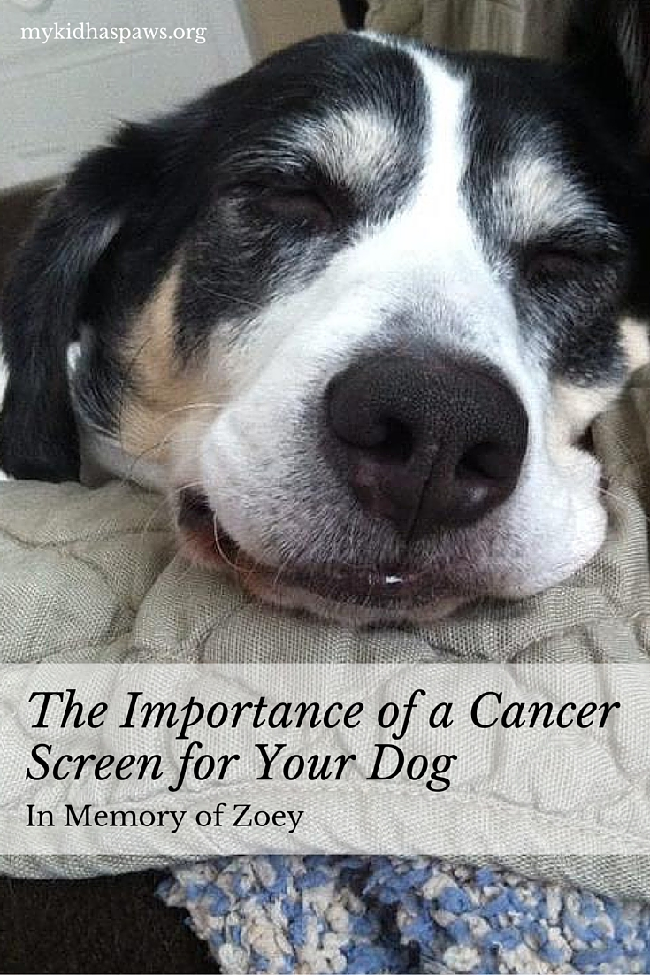 The Importance of a Cancer Screen for Your Dog