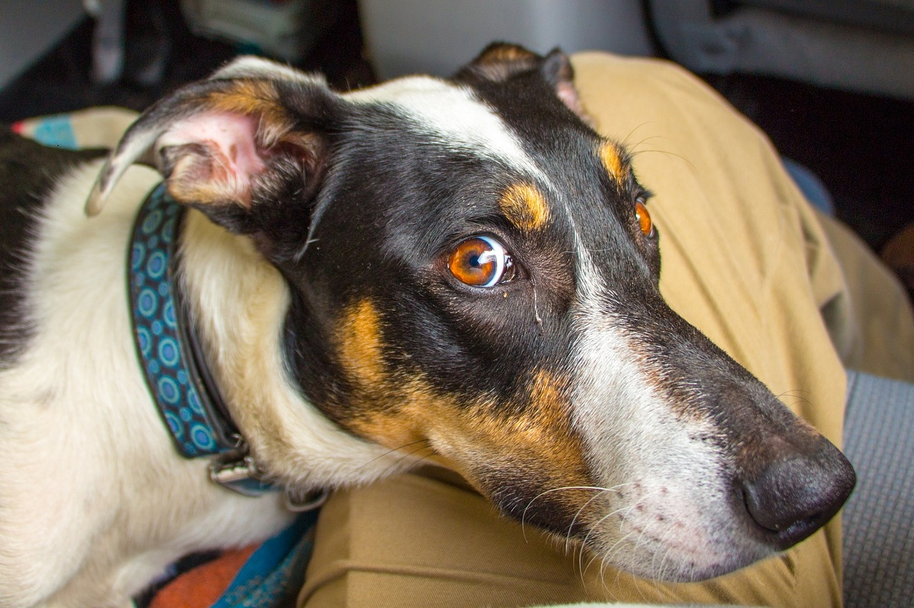 So You're Thinking About Adopting a Dog: 5 Things You Should Consider First
