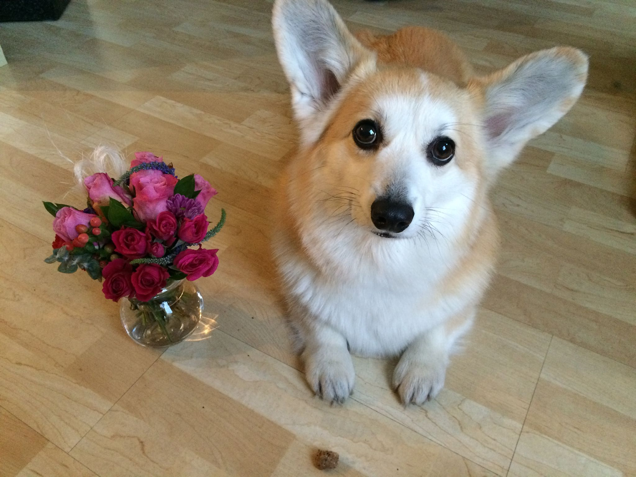 4 Last Minute Ideas For Your Dog Loving Valentine