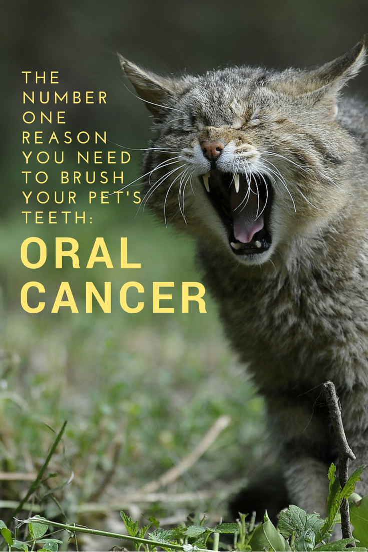 The Number One Reason You Need to Brush You Pet's Teeth: Oral Cancer #MKHPFebruaryChallenge