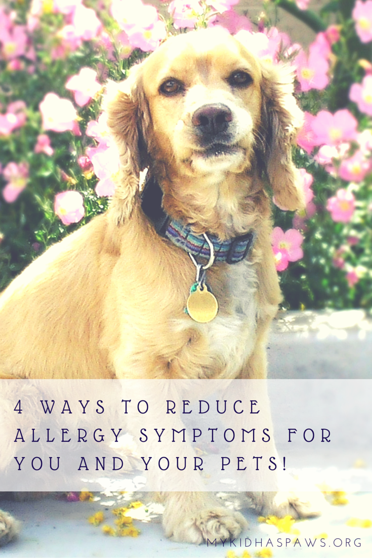 4 Ways to Reduce Allergy Symptoms for You and Your Pets!