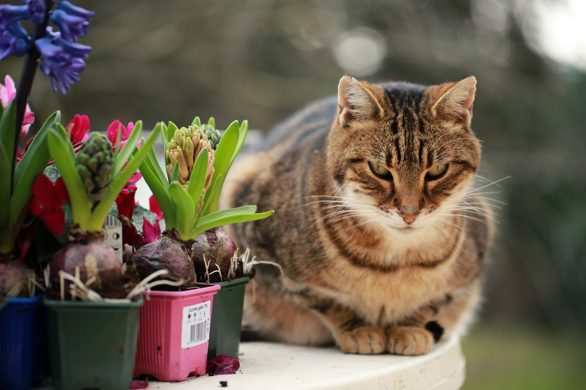 Are You Planting Pet Poisons in Your Yard?
