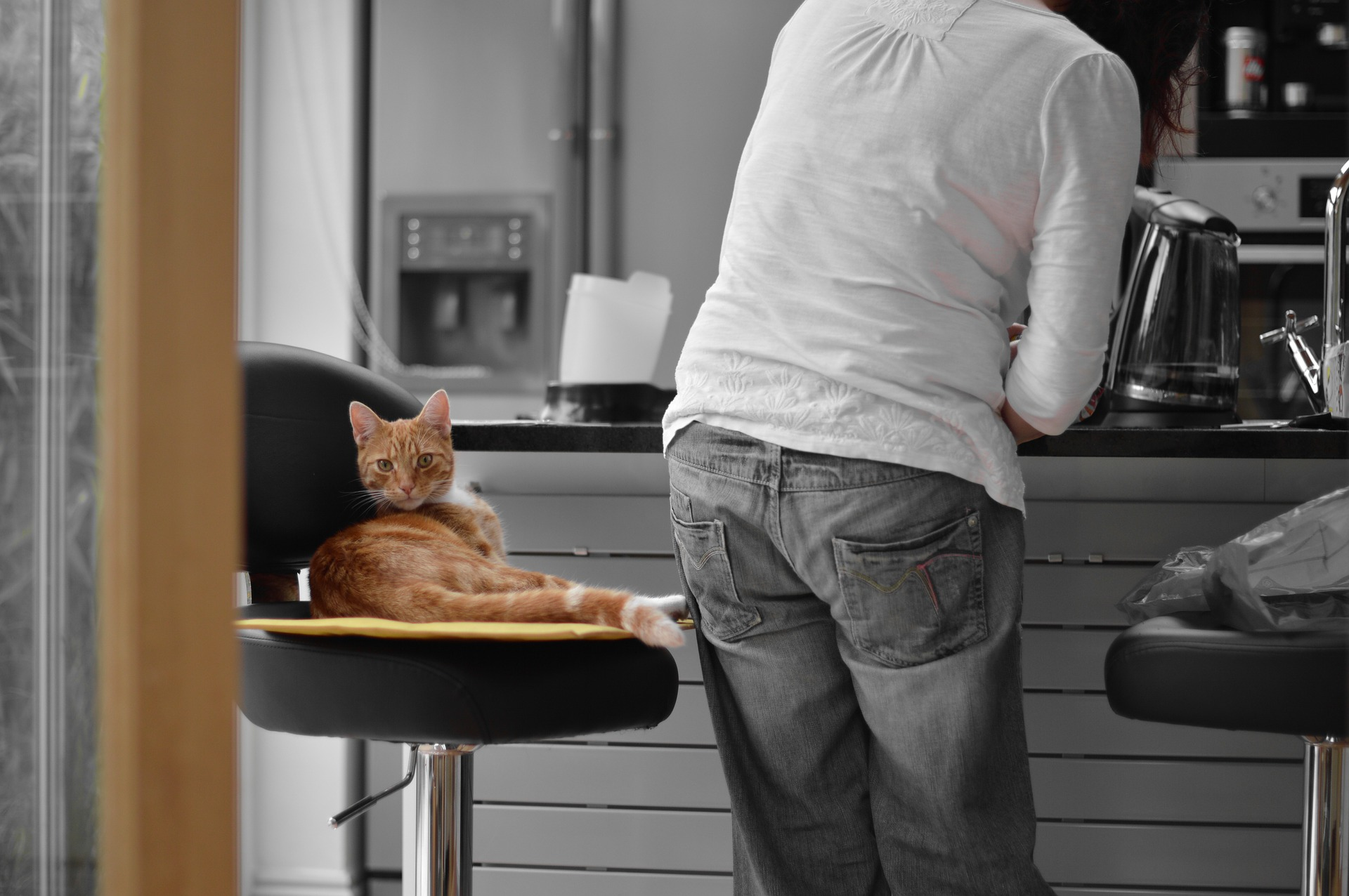 Pet-Proofing the Cabinets