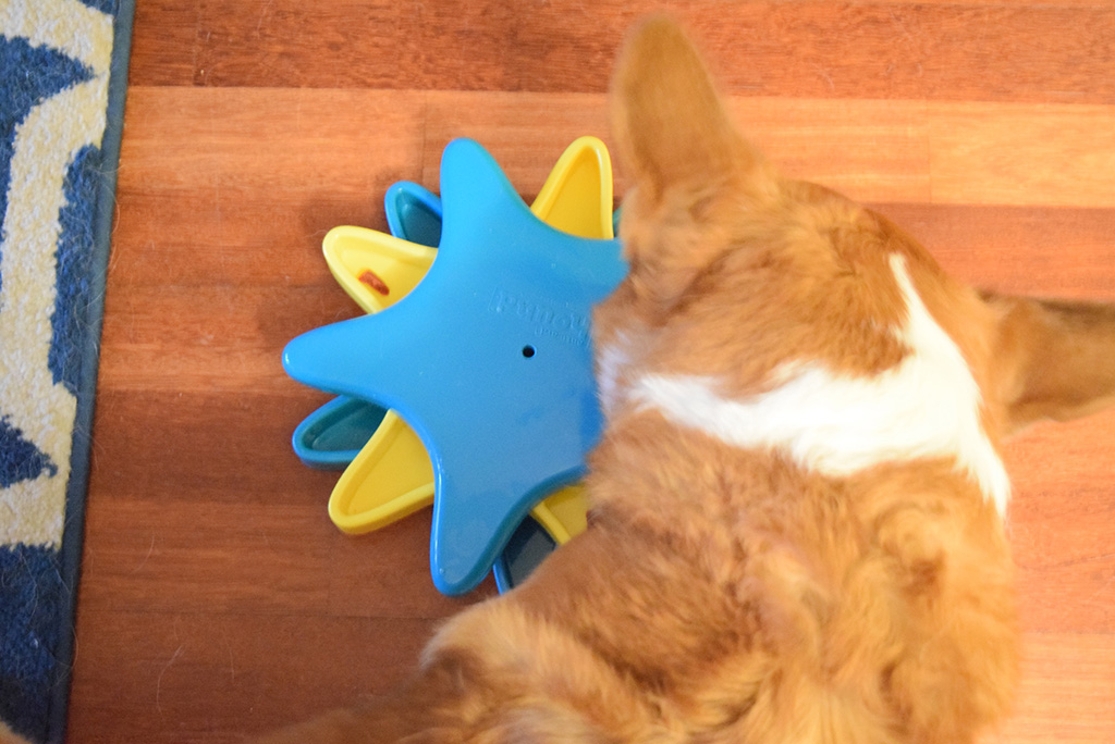 Does your dog love puzzles? Then they need this Outward Hound Puzzle from Chewy.com!