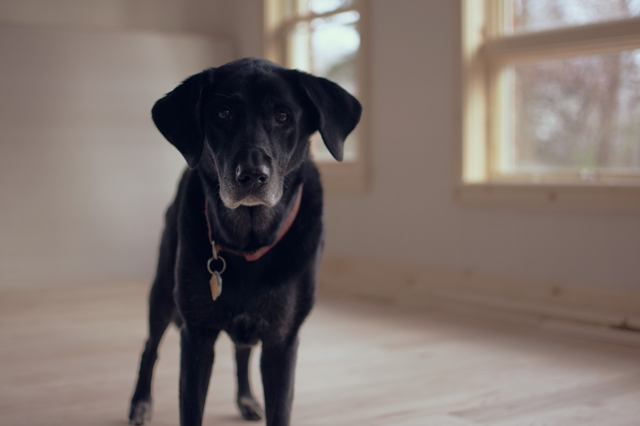 For today's post, I would like to focus specifically on the joy that senior pets can bring to our lives and what you can do as a first time senior pet parent.