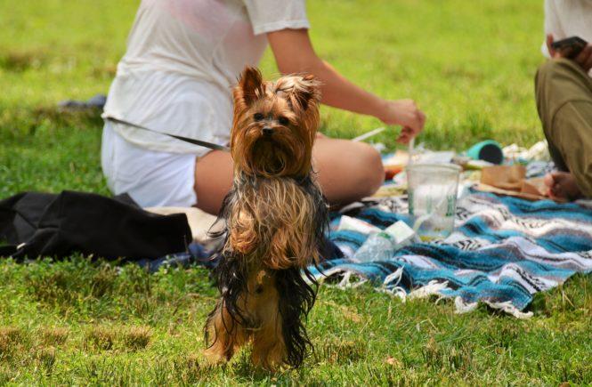 Summer Music Festivals & Dogs