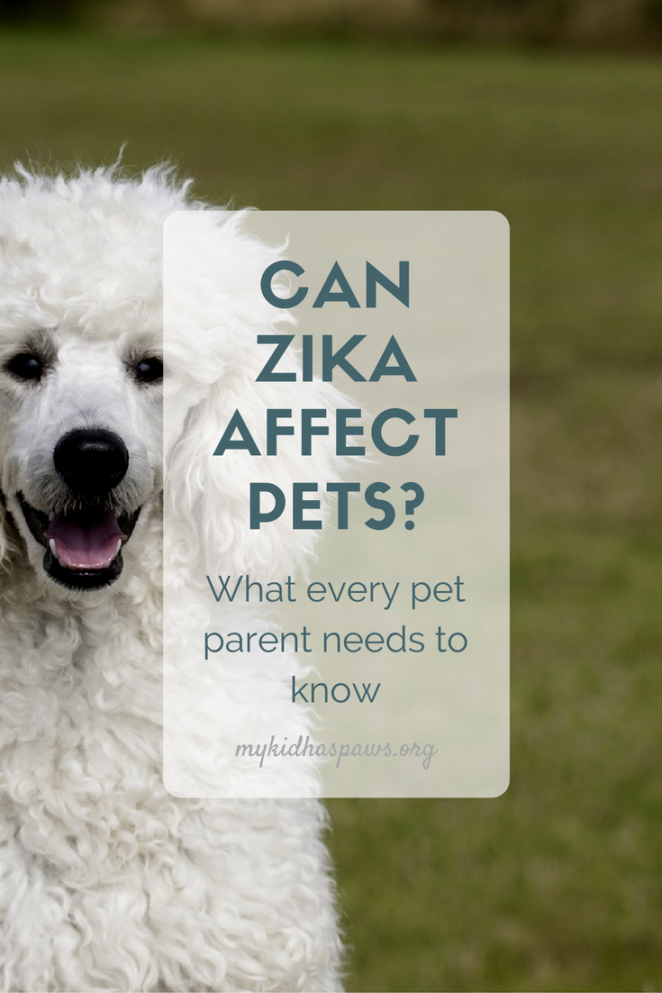 Can Zike Affect Pets? While research is limited, there are a few things you can do to keep your pets safe.