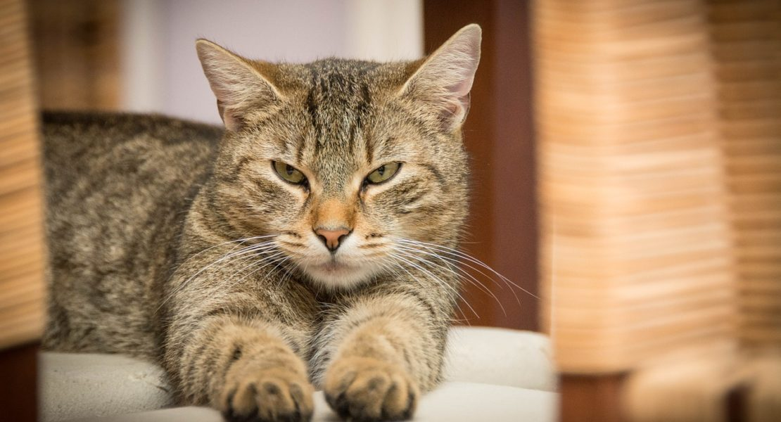 Can Zika Affect Pets?