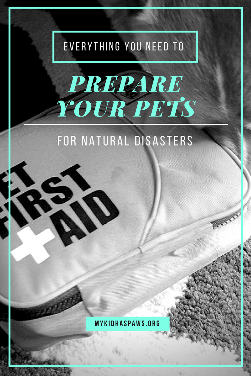 Everything You Need to Prepare Your Pets for Natural Disasters