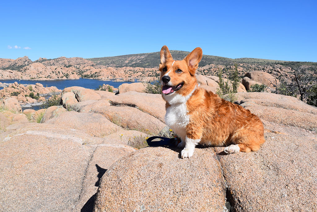 Southwest Road Trip with Your Dog
