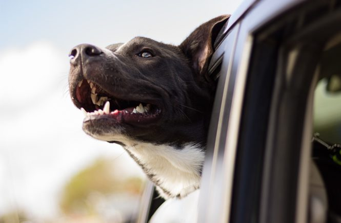 Dogs Left in Hot Cars is Not Just a Summer Problem