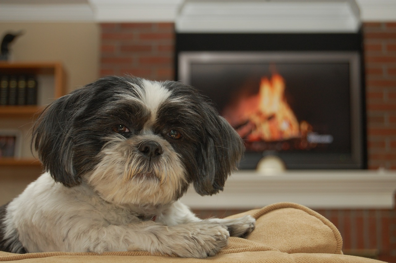 Fire Safety for Pet Parents