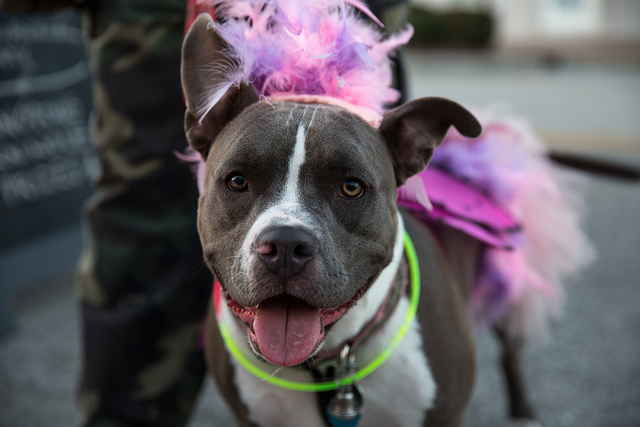3 Ways to Keep Your Dog Safe this Halloween!