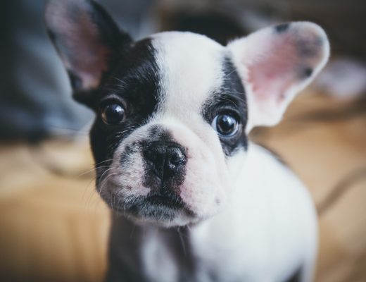 How Important is it for You to Understand Your Dog's Hormones?