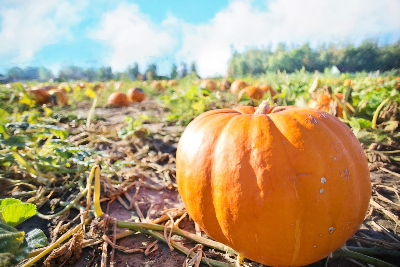 Dog-friendly Bay Area Pumpkin Patches
