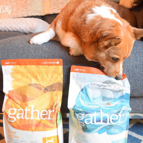 GATHER - Petcurean's new food
