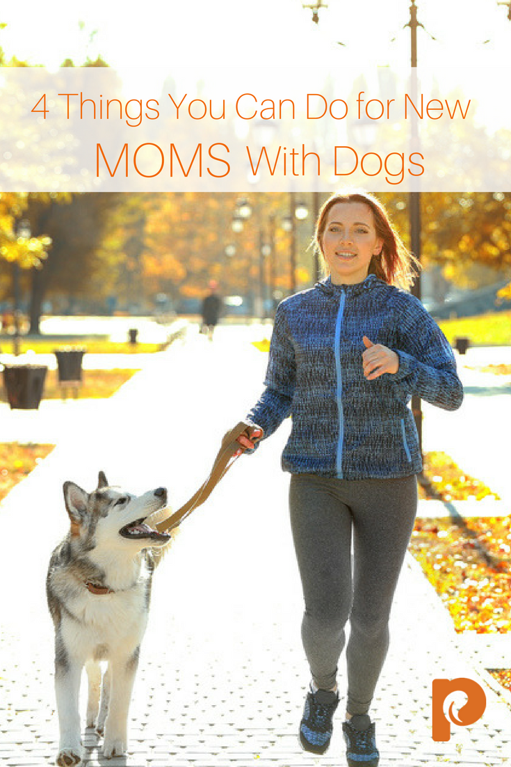 4 Things You can Do for New Moms with Dogs