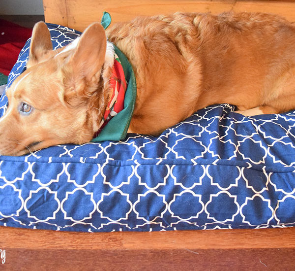 Molly Mutt: The Dog Bed that Fits Your Needs