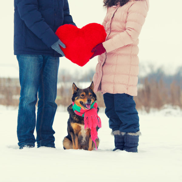 Is Your Dog Your Valentine?