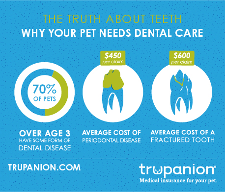 What You NEED to Know About Pet Dental Health