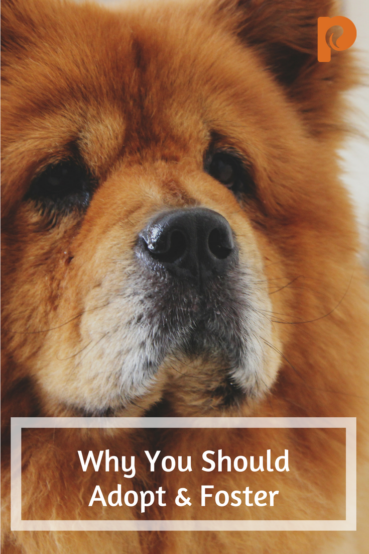 Why You Should Adopt & Foster - Petcurean