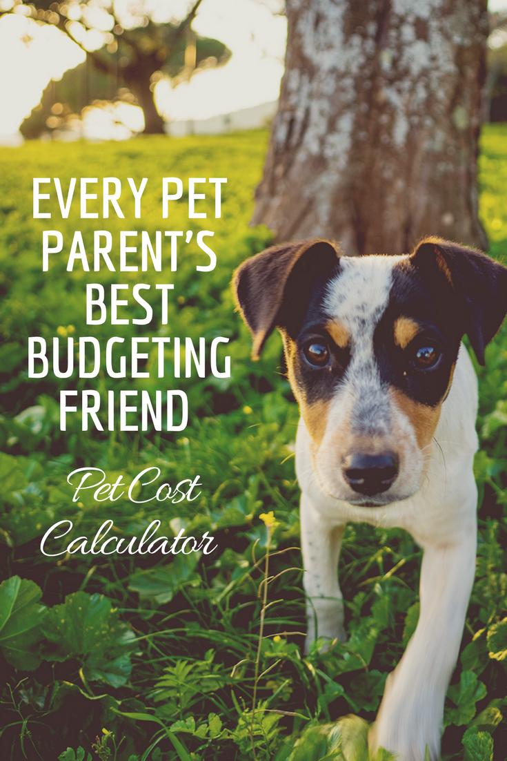 Every Pet Parent's Best Budgeting Friend - Pet Cost Calculator