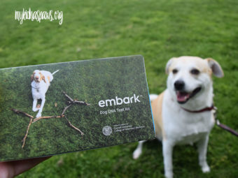Embark Dog DNA Test - Learning More About Your Dog