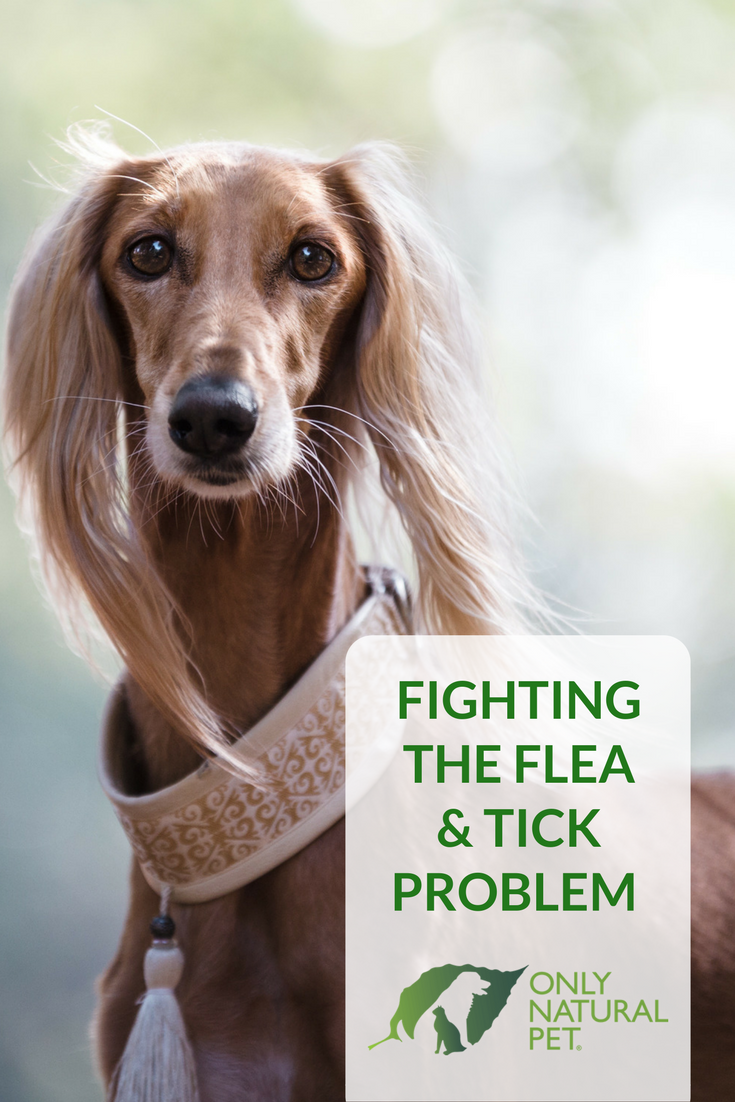 Fighting the Flea and Tick Problem with Only Natural Pet