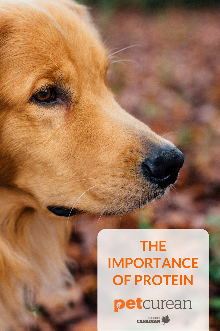 The Importance of Protein - Petcurean
