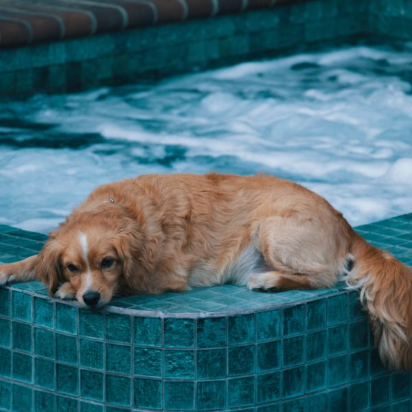 Trupanion Summer Safety Series: Pool Safety for Pets!