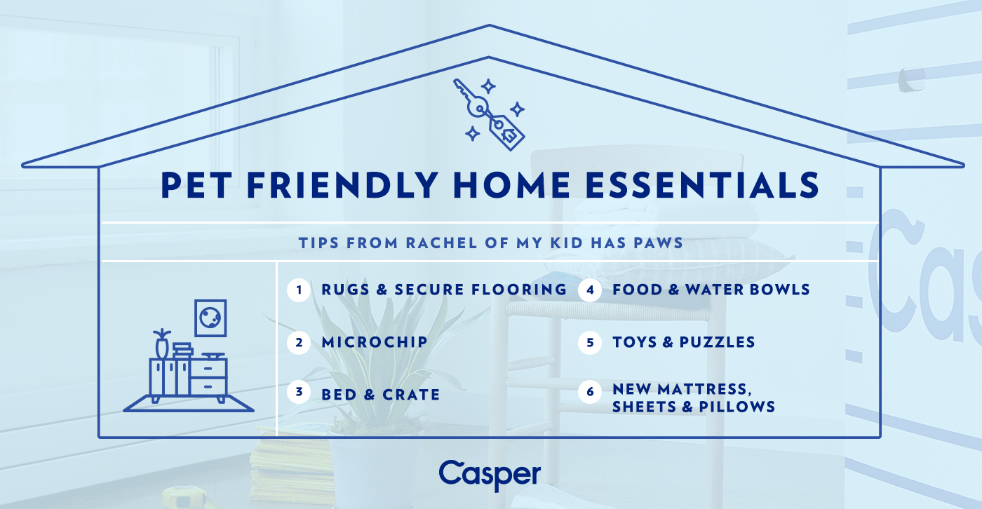 Move-In Day Essentials for Your Pets - with Casper