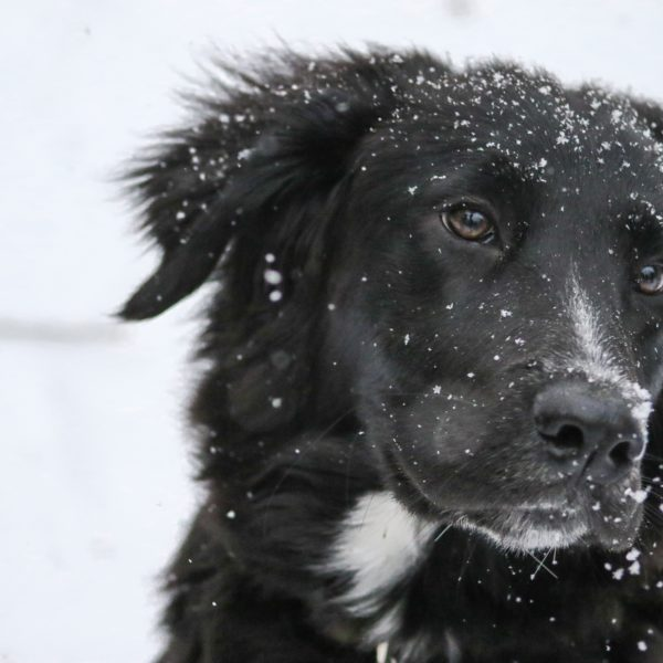14 Ways to Prepare Your Pet for Winter