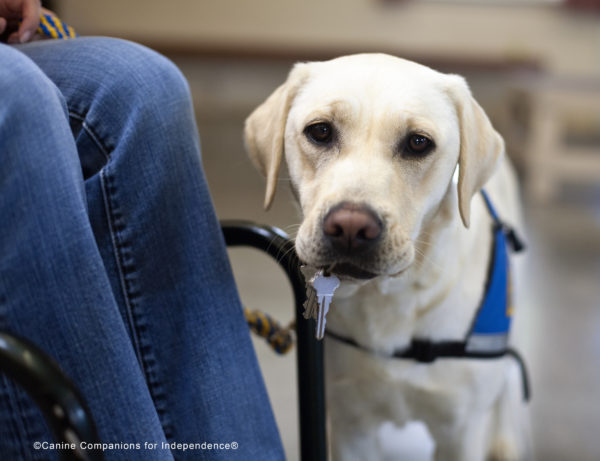 Random Acts of Kindness Day - Canine Companions for Independence