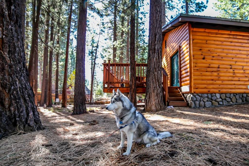 9 Dog-Friendly West Coast Airbnbs We Want to Visit! - My Kid