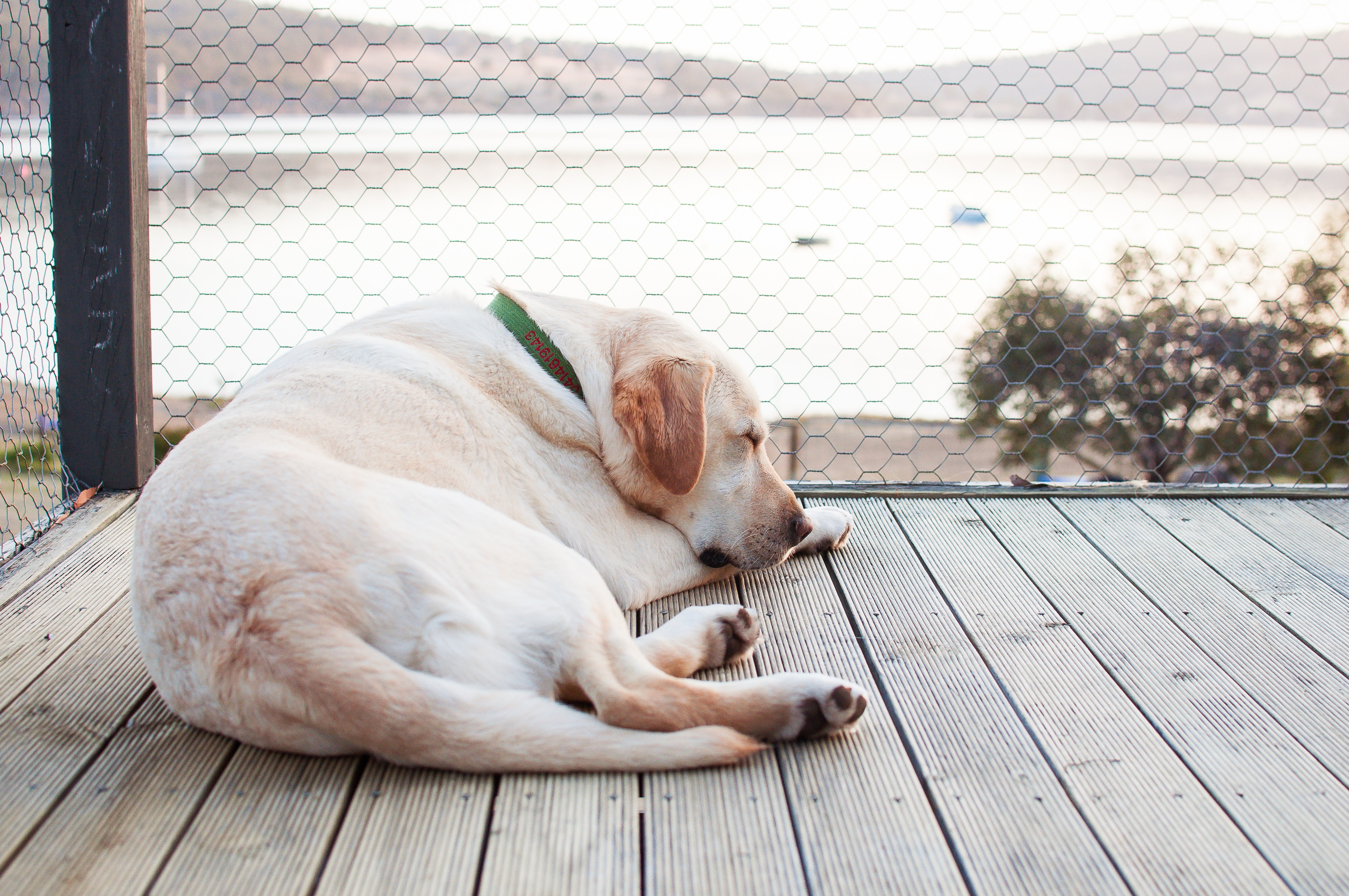 The Lumpy Truth About Canine Lipomas - My Kid Has Paws
